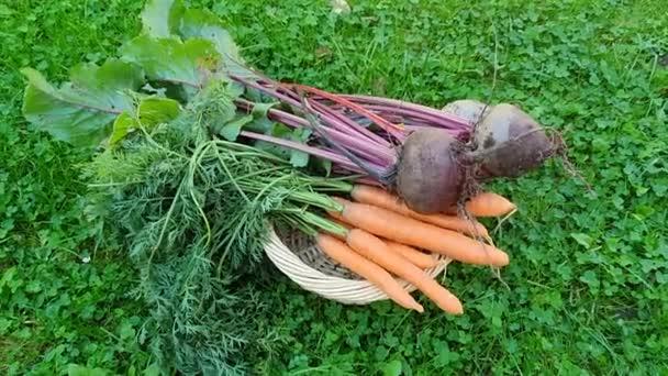 zöldségek, cékla és sárgarépa fonott dobozban a kertben