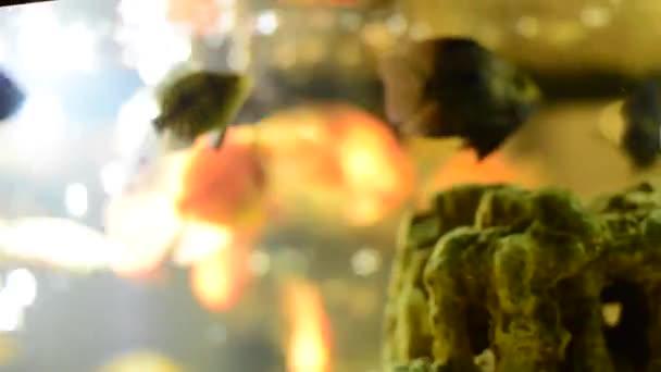 leuchtende Fische im aquarium