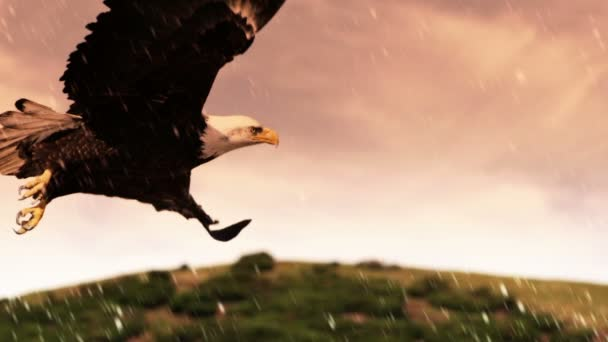 americano bald eagle in volo