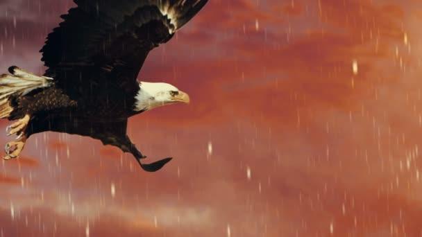 Amerikai kopasz sas repülés