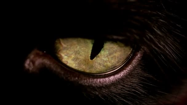 Macro view of a black cats yellow eye.