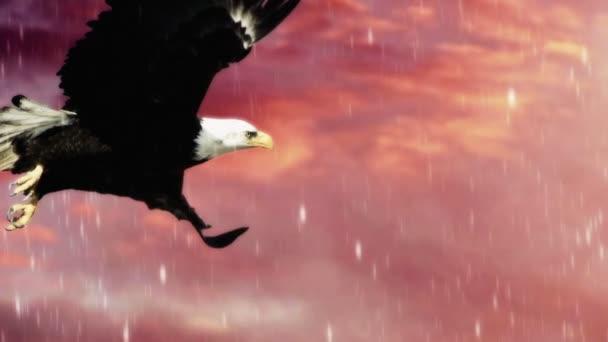 Americký orel bělohlavý v letu