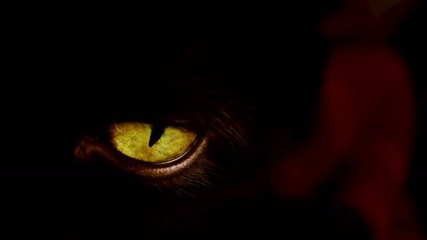 Macro view of a black cats yellow eye.