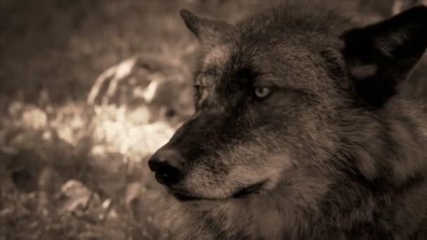 Fekete Farkas Vértes