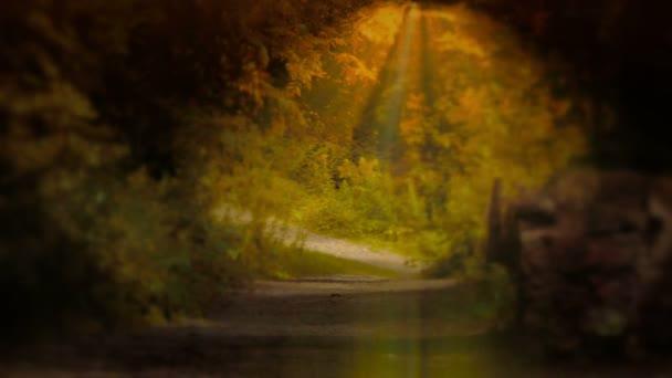 krásný mystický Les