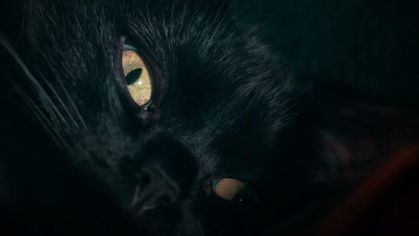 Detailní záběr černé Kočičí oko