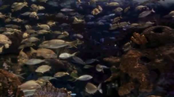 Underwater seascape with many fishes