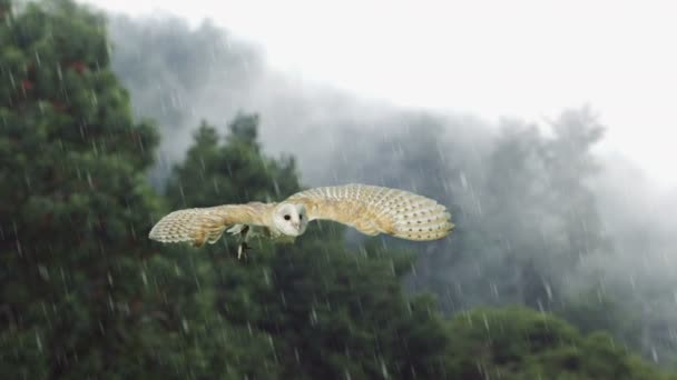 Majestic Owl flying in slow motion