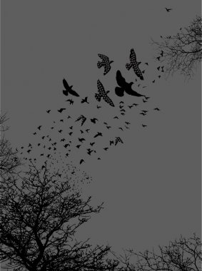 Trees and birds silhouettes