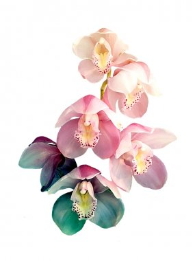 Orchid flowers print in soft colors