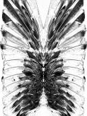 Malebné monochromatický peří