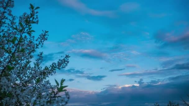 Strom a mraky v timelapse plavat mraky přes oblohu, slunce čas zanikla, kvetoucí strom proti obloze mraky jarní krajina, kterou zahradní stromy kvetou, příroda se probouzí po zimním ovocem kvetoucí