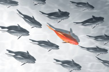 beautiful red fish business background