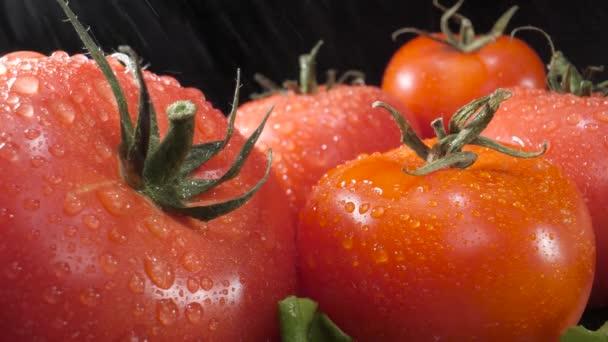 Na rajčata a další zeleninu padají cákance vody. Zavřít. Černé pozadí