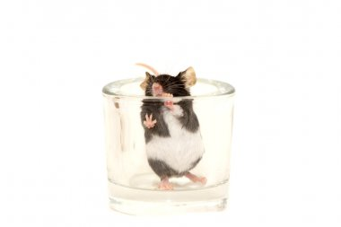 Cute decorative mouse