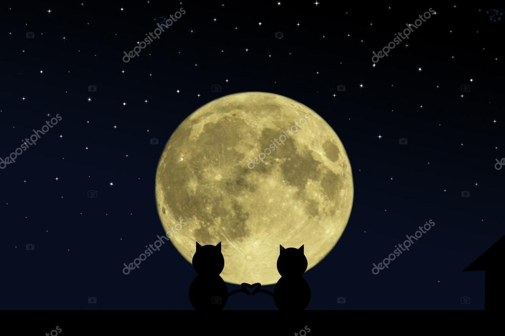 Two black cat crossed their tails in the form of heart on the roof of the house at the time of the full moon