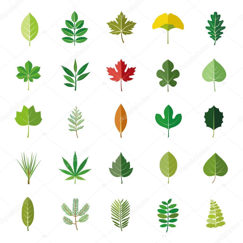 foglie alberi