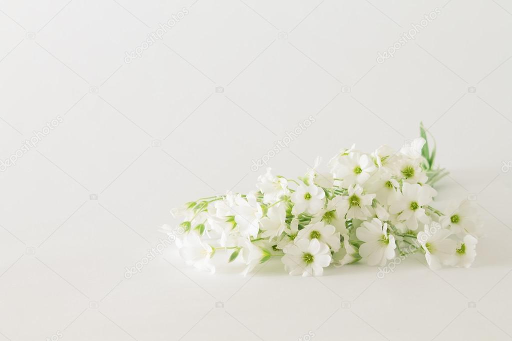 bouquet of small white flowers on a white background — Stock Photo ...