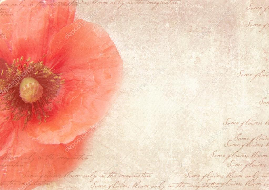 grungy retro background with poppy flowers  a vintage