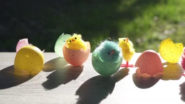 Jsou Velikonoce! konceptuální video líhnutí vajec a kuřat.