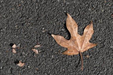 Star leaf on black floor