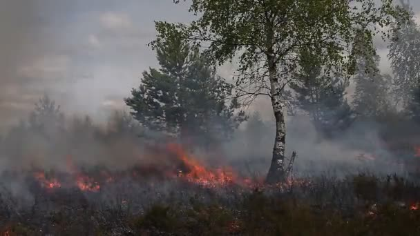 Dry heath with sparse wood in fire