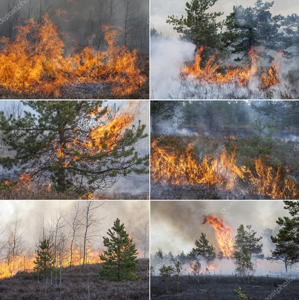 Collection with six forest fire images