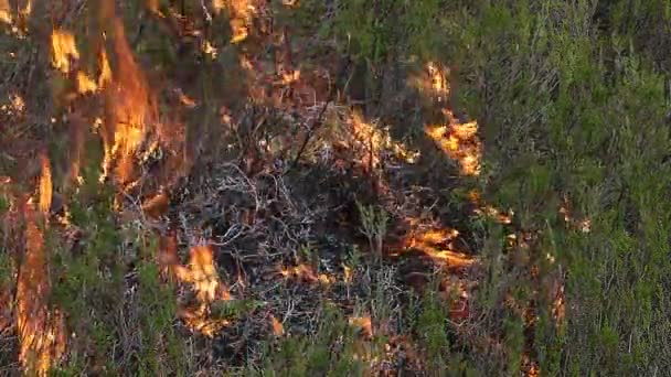 Close up of forest ground fire in heather