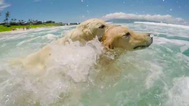 Psi, koupání na pláži