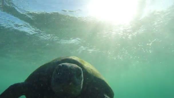 Indiai-tengeri teknős