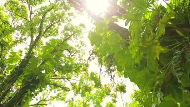 Dschungel-Baldachinlinse flackert auf