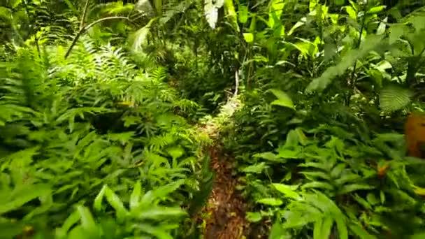 zelené džungle