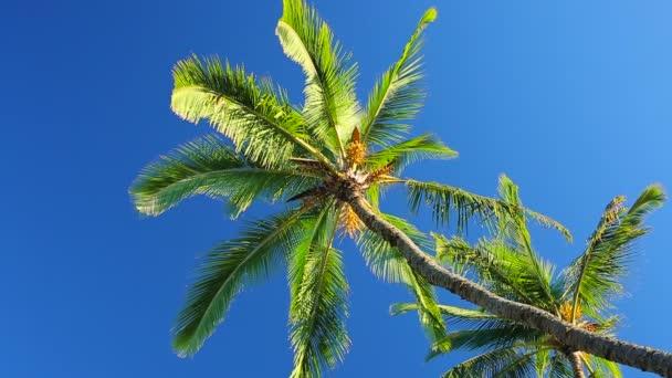 Palmové stromy na krásné modré obloze prosluněné pozadí v ráji.