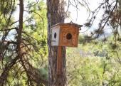 A fenyő csodálatos madár ház.