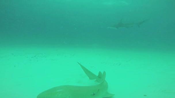 Divers shoot sharks floating underwater. Ocean wildlife. Deepness. Dangerous