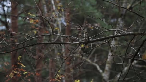 View sparrow sitting on tree branch without leaf in autumn day in park. Nature