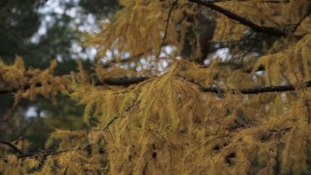 Pohled na strom s žlutými listy v podzimní den. Park. Zelené stromy.