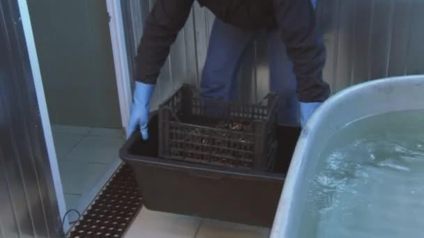 Vasca Da Bagno In Plastica : Uomo nei guanti di mettere giù cozze crude in scatola di plastica