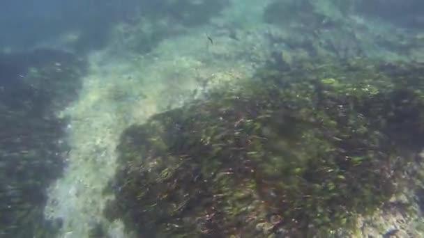 Diver swim in ocean, plunge underwater. Tropical coral reefs. Animals. Nature