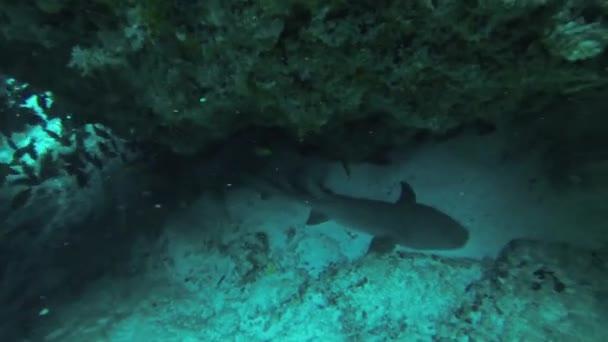 Divers swim underwater between reefs. Blue water. Deepness. Many fish. Shark.