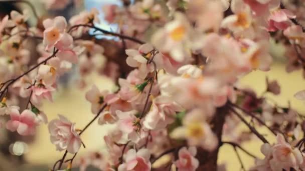 Pohled na kvetoucí japonská sakura. Krásné květiny. Kvetoucí