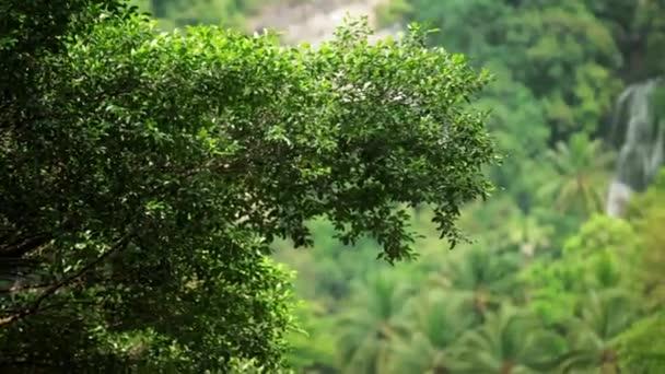 Tropical waterfall flows through dense rainforest
