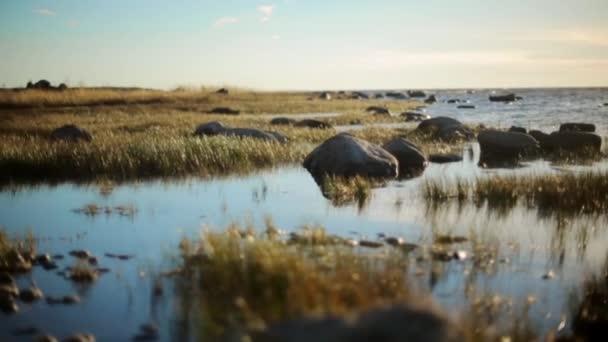 Mořské pobřeží s velkými kameny a trávy. Klidná vodní hladina. Bažina. V létě. Nikdo