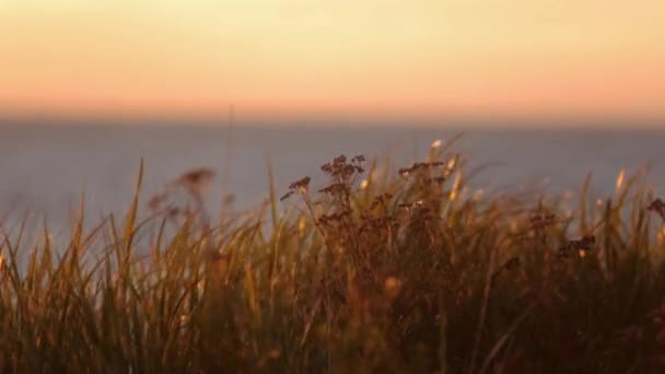 Grass on hill shakes from wind. Beautiful sea sunset on background. Close up