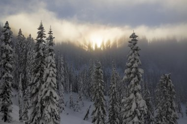Snow Covered Mountain Forest Ridgeline with Hazy Sunset and Light Rays in Foggy Trees