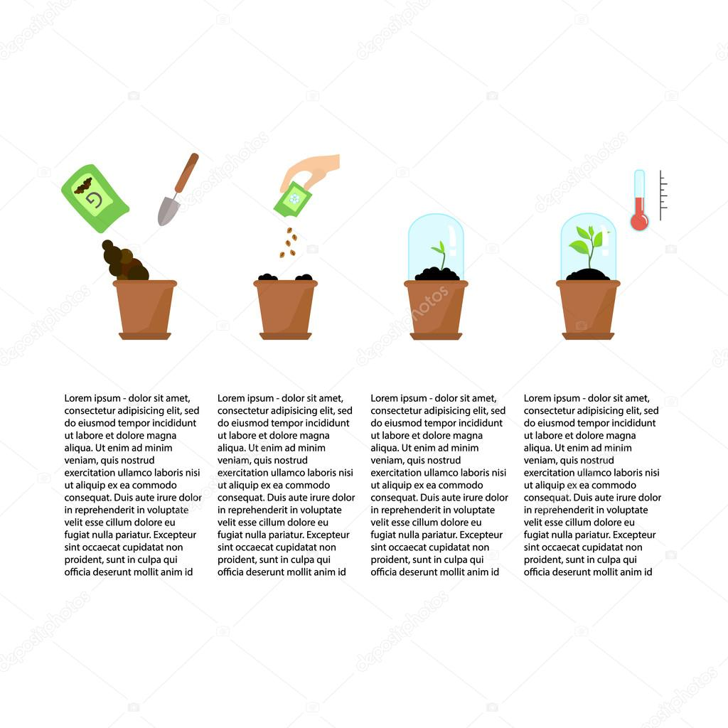 Timeline infographic of planting tree process