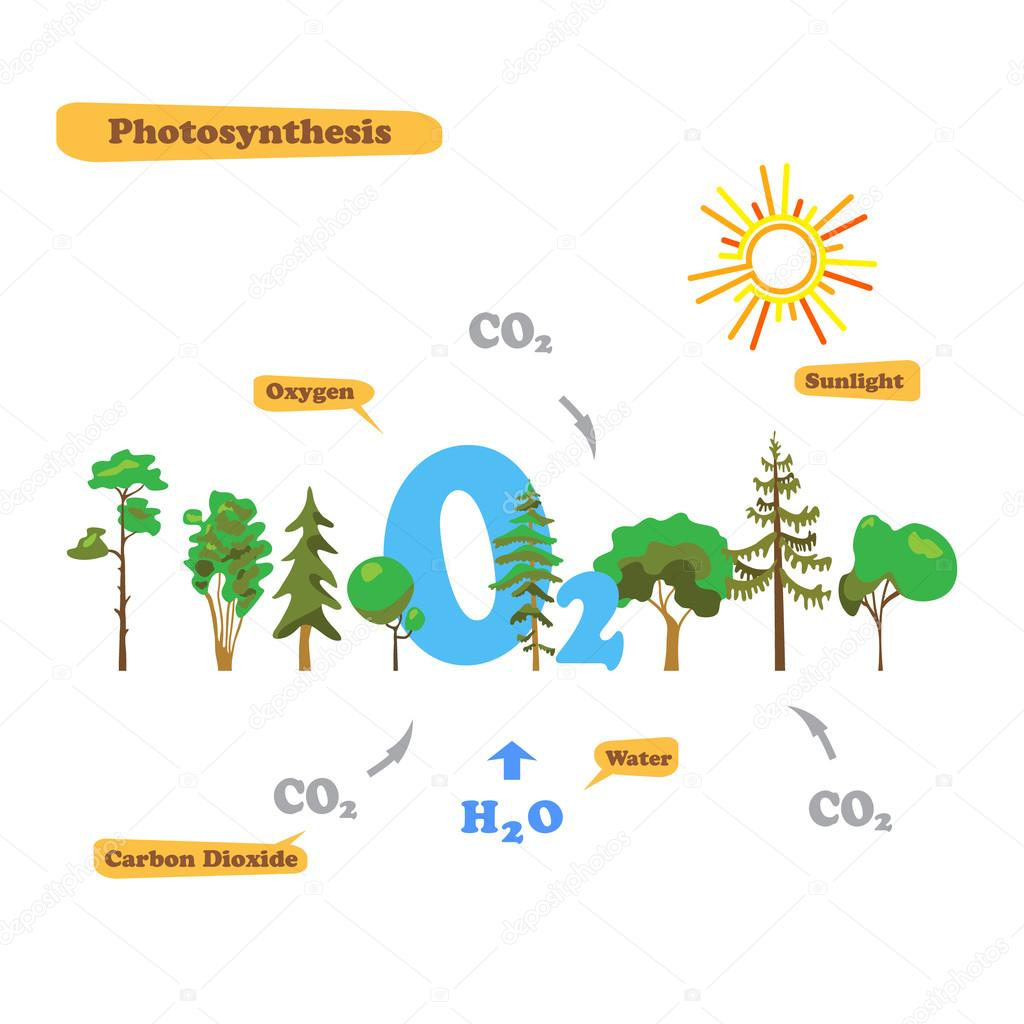 Image of photosynthesis