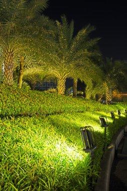 Lamps and garden night scene