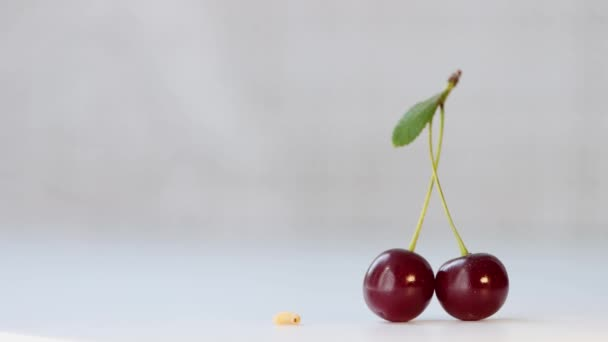Little worm and cherry.A pair of cherries on a branch with a leaf on light gray background.A worm is crawling nearby.