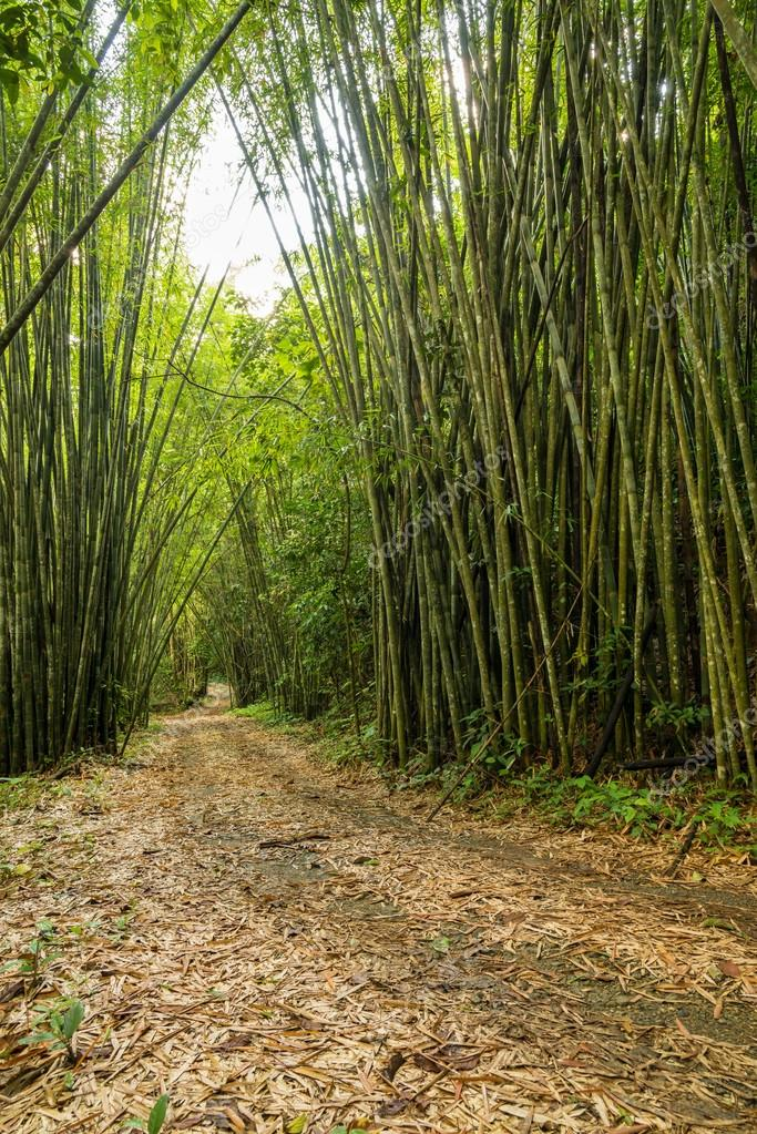 bamboo forest way path